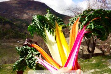 blettes ou bettes colorées, sanspour100plaisirs.com